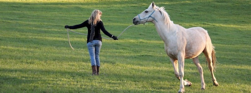 Natural Horsemanship Training