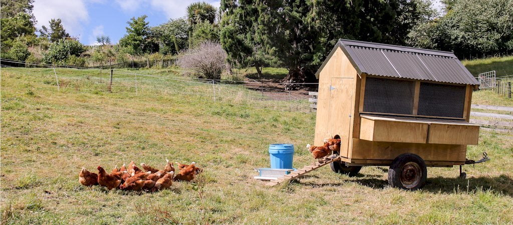 Food, Farms and Chickens