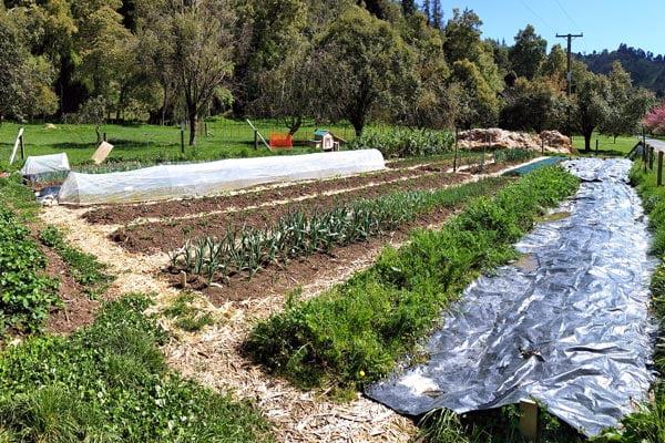 The Bigger Better Vegetable Garden