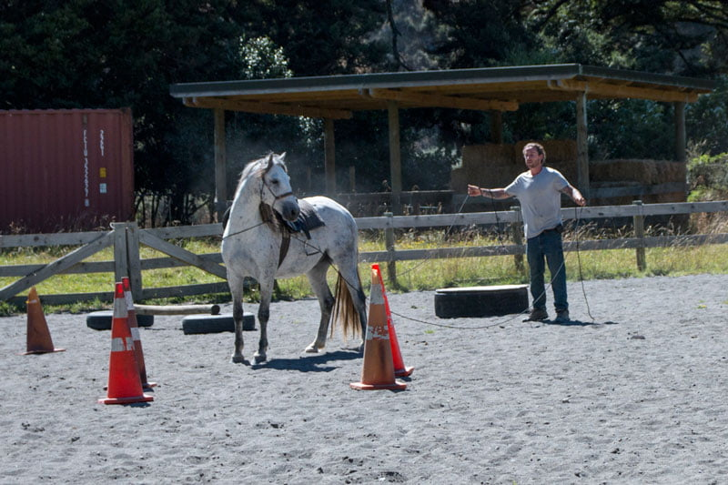 training awa the wild kaimanawa horse