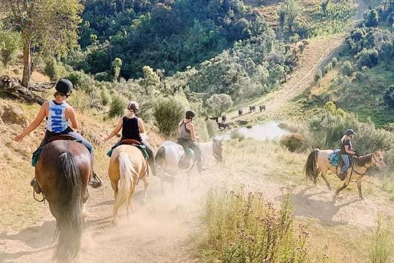 summer horse trekking 2