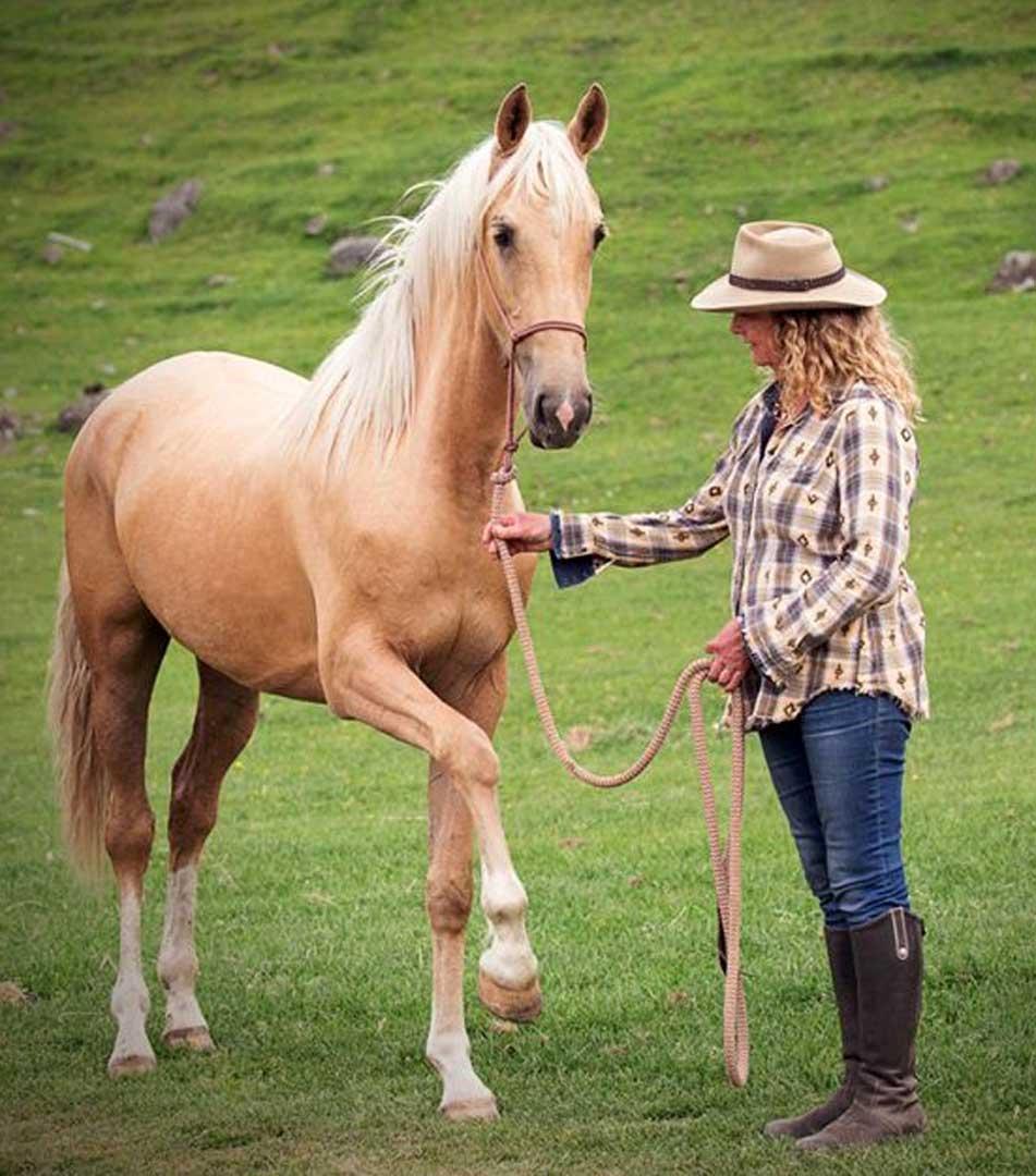 Harmony With Horses